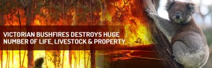 Victorian Bushfires destroys huge number of life, livestock & property.